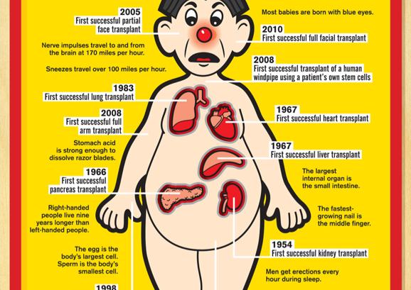 28 curiosità sul corpo umano