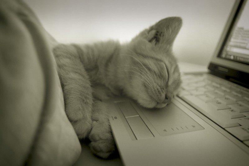 gattino addormentato sulla tastiera di un computer portatile