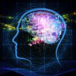 Come il cervello riconosce gli oggetti