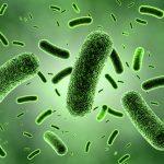 Come studiare la resistenza agli antibiotici dei batteri ispirandosi a un film