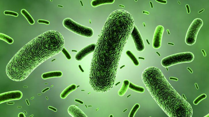 immagini di batteri al microscopio