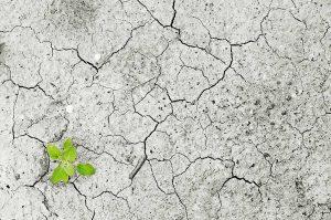 una piccola pianta cresce in un suolo desertificato