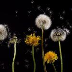 Allergie: 9 semplici accorgimenti per affrontarle meglio