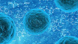 Un'immagine al microscopio di cellule staminali