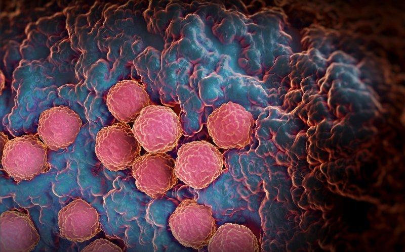 immagine al microscopio del virus della rosolia