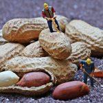 Allergia alle arachidi: una sperimentazione dai risultati eccellenti