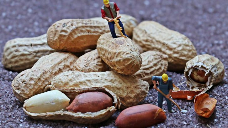 delle miniature di operai simulano di scavare dei gusci di arachidi