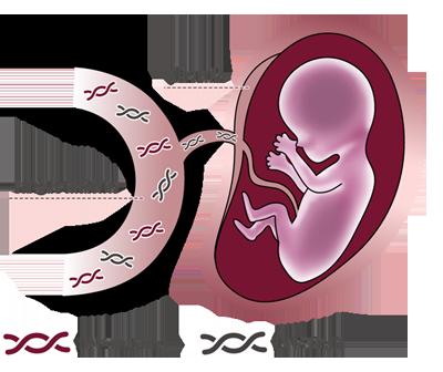 prenatal safe test