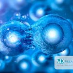 Cellule staminali e diabete: nuove prospettive