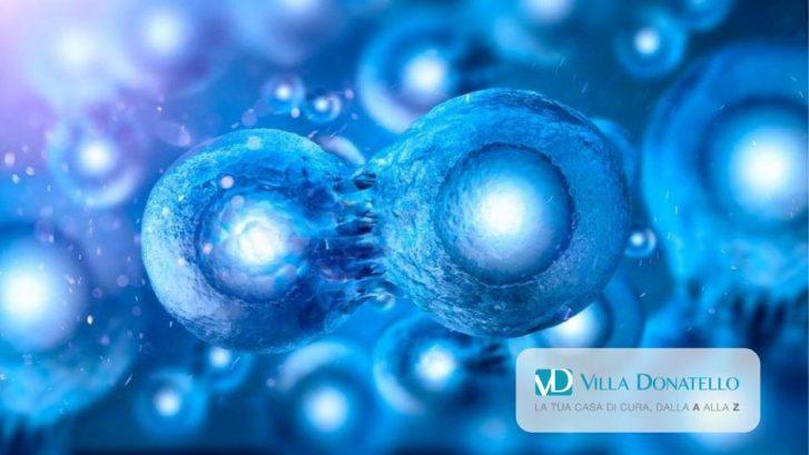 immagine di cellule staminali