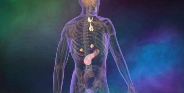 il corpo umano mostra il sistema endocrino
