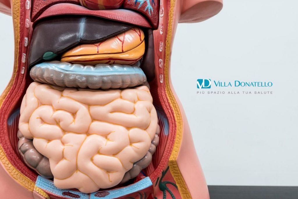 immagine di un manichino dove è esposto il nostro sistema digerente